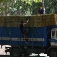 camion alpacas 2